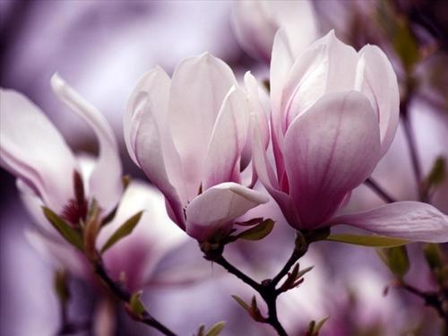 Ngắm diêm my 9x quyến rũ tuyệt trần với hoa môc lan