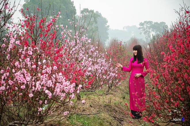 Vẻ đẹp hoa đào các vùng miền việt nam