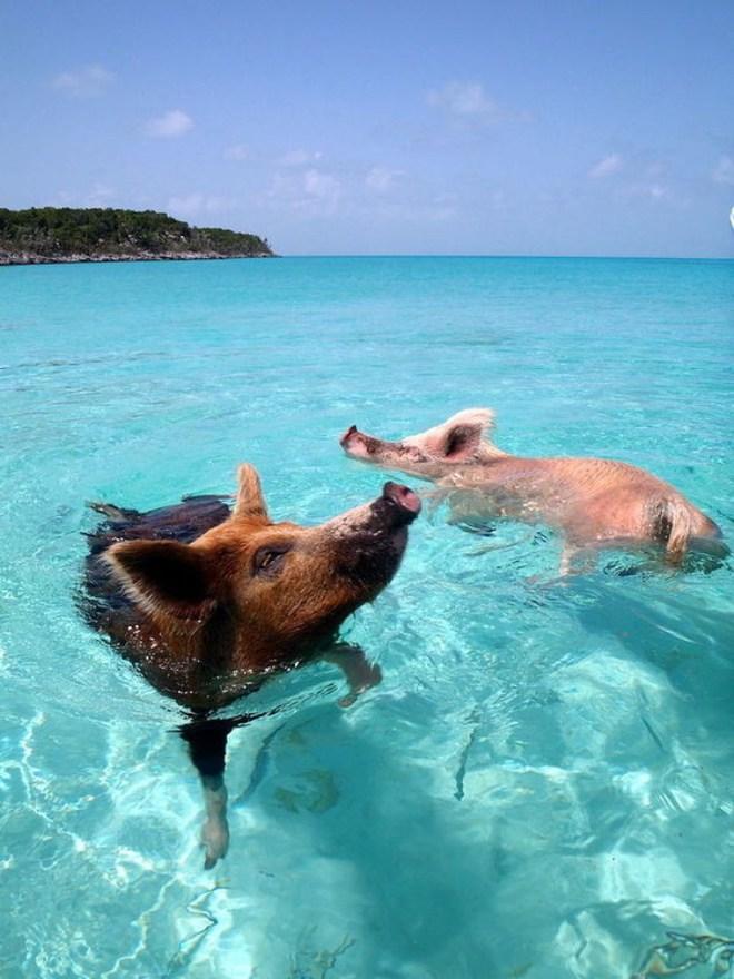 Độc đáo hình ảnh những hòn đảo toàn động vật trên thế giới
