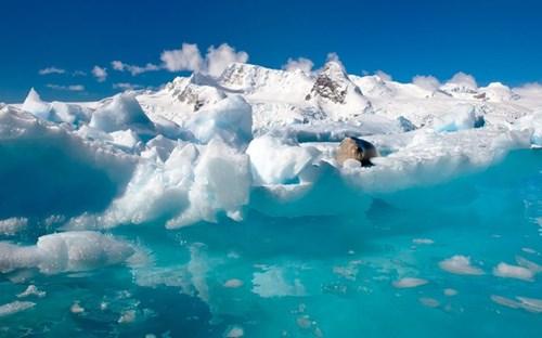 Sinh vật bí ẩn tồn tại dưới lớp băng dày 740m ở nam cực